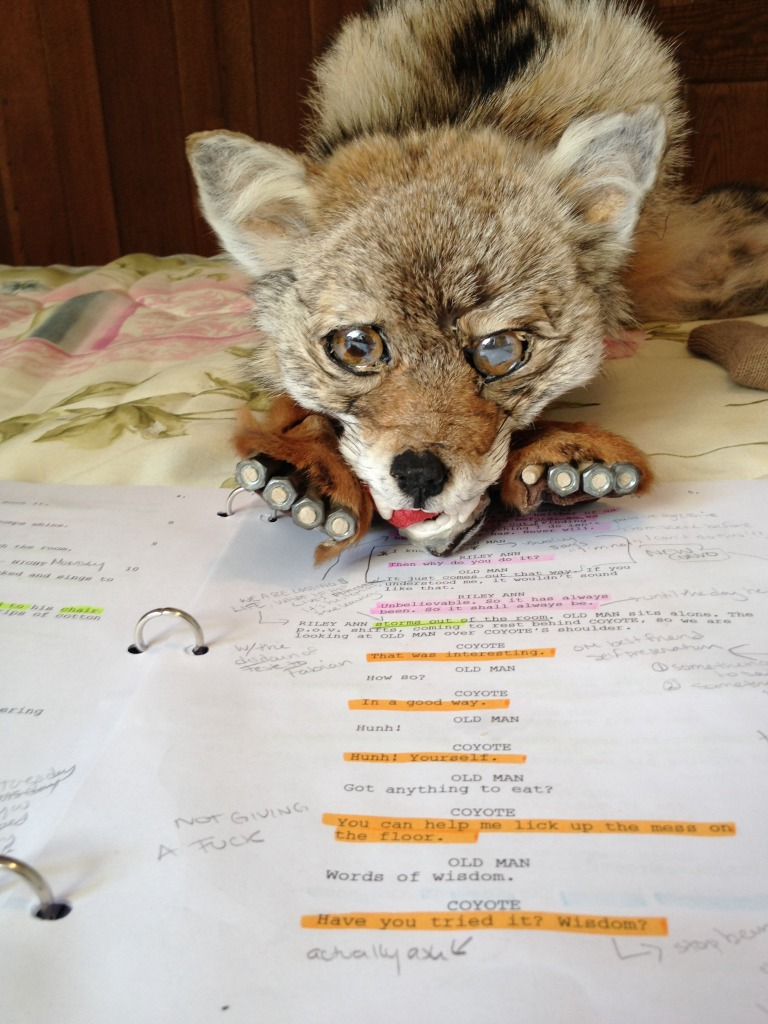 Our current iteration of Coyote learning his lines.